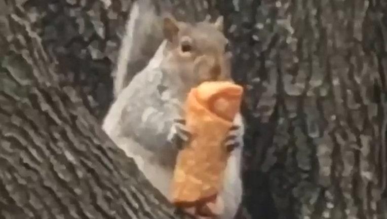 whatisny_eggroll squirrel_1032019_1546538146203.jpg-401385.jpg