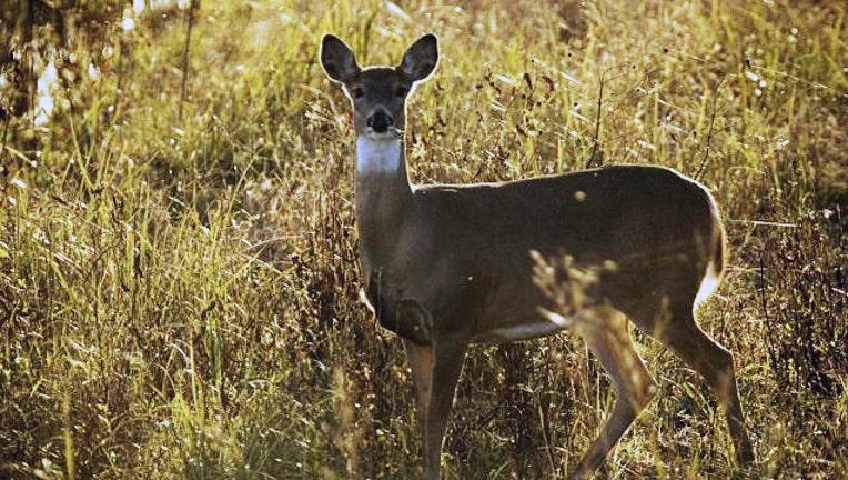 whitetailed deer_1467484089140.jpg