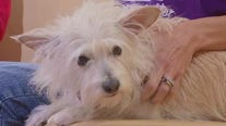 Pet of the Week: Mike