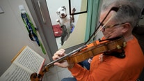 'I came out in tears': Professional violinist performs for abused shelter dogs to calm them