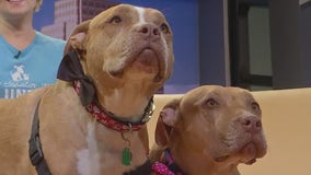 Pet of the Week: Frick and Frack