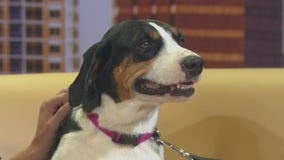 Pet of the Weekend: Patsy Cline