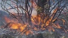 Bastrop County Judge declares local disaster, prohibits outdoor burning