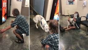 Bobo, a once-lost dog, is ecstatic when finding owner