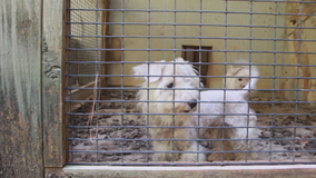 Charges pending after dogs rescued from puppy mill