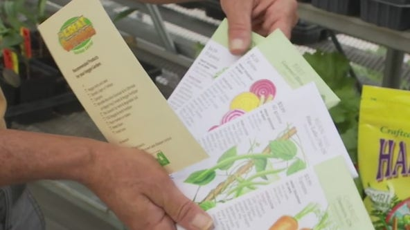 Your Garden: Planting Fall Vegetables