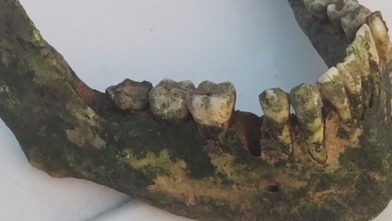74603167-Jaw_bone_discovered_in_Bastrop_County_0_20190731022544
