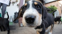 Owning a dog could help you live longer, study suggests