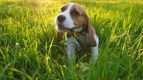 Puppy Bowl, Austin Humane Society celebrates 13th Annual football themed adoption event