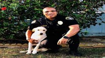 Police officer adopts dog he found in stolen car