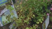 Your Garden: Frozen plants