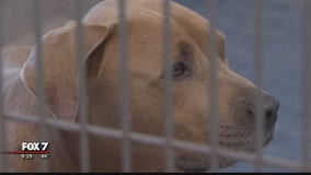 Williamson County Animal Shelter over capacity after intake of 30-plus dogs stuck in legal system