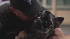 New Texas law allows law enforcement animals to retire with their handlers