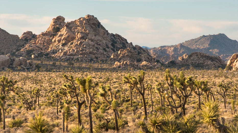 Lost-Horse-Valley-features-the-parks-iconic-Joshua-trees-and-rock-outcrops..jpg