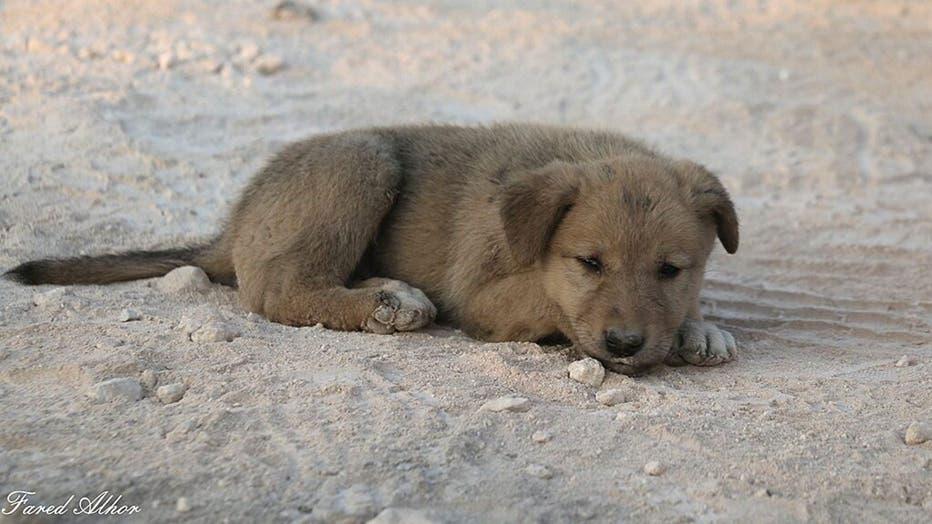 puppy-1-FARED-ALHOR.jpg