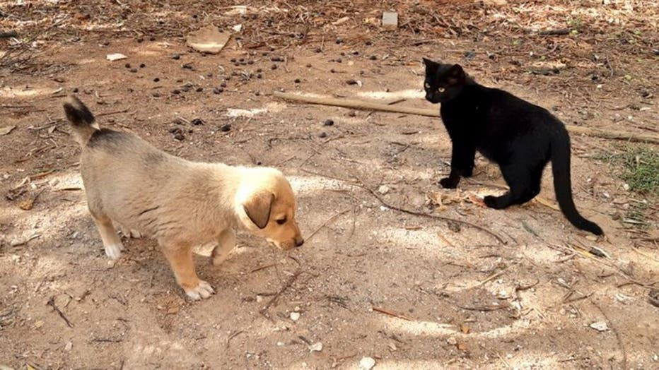 puppy-3-FARED-ALHOR.jpg