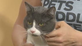 Pet of the Week: Hutch