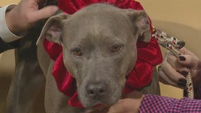 Pet of the Week: Rain