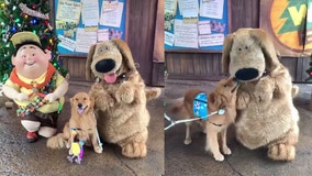 Service dog overjoyed to meet Dug from Disney's movie 'Up' in adorable video