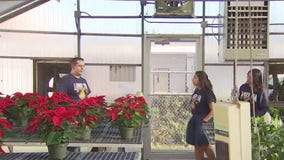 Navarro High FFA students keep 58-year-old Christmas tradition alive