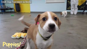 Canines choose their own Christmas presents at animal shelter