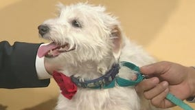 Pet of the Week: Addie