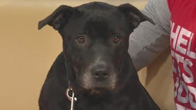 Pet of the Week: Whitney