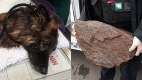 Drowning dog tied to 'heavy rock' rescued from river in England, woman arrested, police say