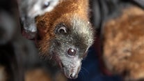 Bat found dead in Cedar Park tests positive for rabies