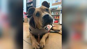 Austin Animal Center opens for no appointment adoptions