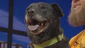 Pet of the Week: Zola