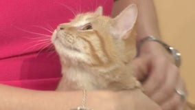 Pets of the Week: Macron and Galette