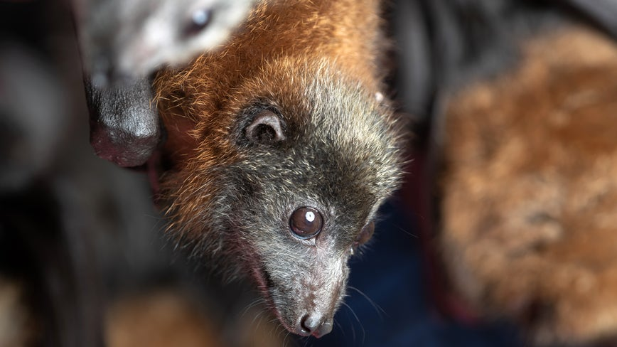 Live bats removed from East Austin Elementary School