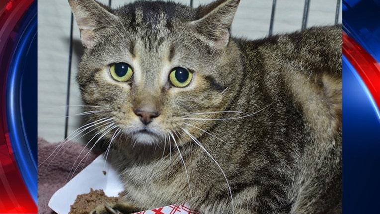 wjbk_abandon cats 1_052019_1558386034150.jpg-65880.jpg