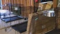 Austin Pets Alive! asks for help after flooding at shelter