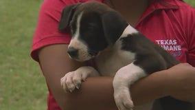 Pet of the Weekend: Texas Humane Heroes