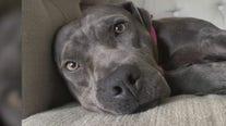 Pet of the Weekend: Emori