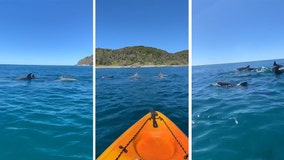 'Feeling pretty lucky': Kayaker gets up close with pod of dolphins