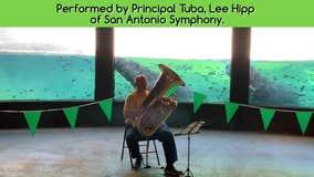 Tuba player performs for hippos at San Antonio Zoo