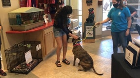 Tennessee roofing company surprises new dog owner by paying adoption fee