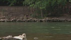 Water, algae at Bulk Creek test negative for toxins