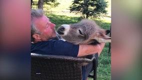 'Honey, baby, mine': Man serenades donkey foal with 'Crawdad Song'