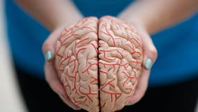 NIH study suggests human brains work like online search engines to remember certain words better than others