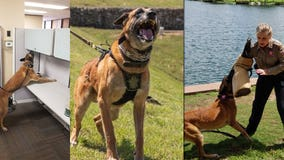 TCSO retires K9 Steele, welcomes new K9s Shadow and Radar