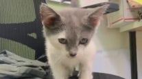 Pet of the Weekend: Kiera