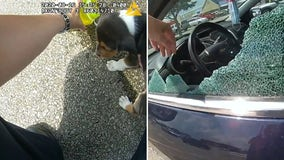 Ohio officer rescues puppy trapped in hot vehicle