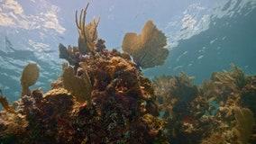 North Carolina man visiting Florida Keys cited for taking federally-protected coral