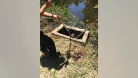 Beaver rescued from Murphy Park drainage hole in Taylor