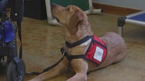 Service Dogs Incorporated pairs injured Marine with new service dog