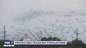 FOX 7 Discussion: Protecting bat populations